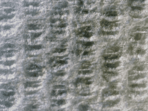 A close-up example of structured one ply