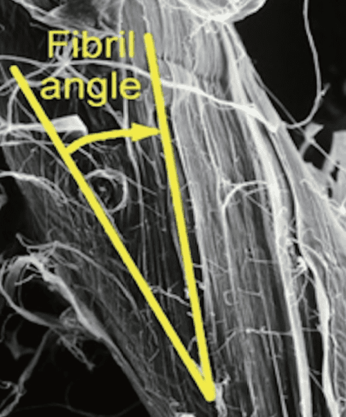 Microfibril angle: the angle between the orientation of the cellulose microfibrils in the S2 layer of the cell wall and the longitudinal axis of the fibre. The fibre property has a great influence on pulp strength and other quality attributes.