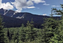 Climate control: Canfor maintains forest certification on the 23 million hectares of forest licenses in Canada.