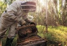 Sustainable eucalyptus plantations - Ensuring natural biodiversity